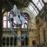Whale Skeleton at the National History Museum